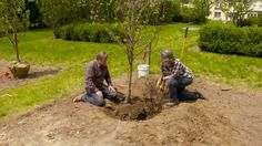 How to Plant a Home Orchard