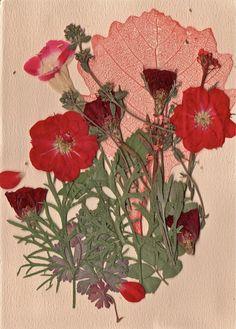 "pragmvtic: "" hurricane-girls: ""❁❁ ❀❀✿✿ Gotten into pressing flowers recently ❁❁ ✿✿❀❀ "" Foto Casual, Art Inspo, Poppies, Artsy, Nerd, Wallpaper, Drawings, Creative, Illustration"