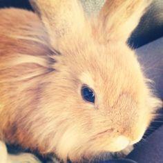 Dit is de vader van die kleine konijntjes op die andere foto van bunny's.❤️❤️ Hij heet yolo en likt graag mensen. Net als een hond.