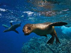 Galápagos Islands, Ecuador: Best Family Trip, National Geographic Travel [Photograph by Michael S. Nolan, Linblad Expeditions]