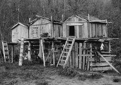 Athapascan fishing camp on the Yukon River, Alaska, ca. 1904.