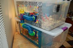 diy hamster cage, also there's video of hamster's reaction to the bew cage :)