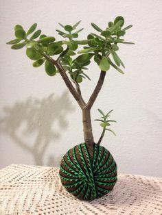 Kokedama de planta jade...maybe if I tried to grow a Jade plant like this< I wouldn't kill it!...lol...