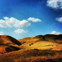 North Israel by Osi