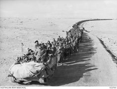 A NEW ZEALAND BREN CARRIER CREW LEADING A COLUMN OF ITALIAN PRISONERS FROM THE FORTRESS. Afrika Corps, North African Campaign, British Armed Forces, Ww2 Pictures, Lest We Forget, Modern History, World History, World War Two, Military Vehicles