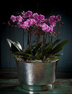 Autograph™ Vienna Orchid Bowl