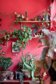 Love the complimentary red walls and green succulents