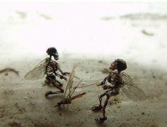 tessa farmer. | farmers, Skeleton