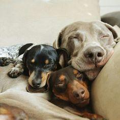 #animales #mascotas #pets #lindas #hermosas #beauty #cutest #cachorros #perritos #friendship #amistad #mejores #amigos