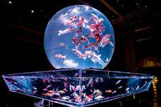 金魚コレクション「Kingyo Collection」 『ECO EDO 日本橋 アートアクアリウム2015~江戸・金魚の涼~&ナイトアクアリウム』が東京・日本橋三井ホールで開催される。期間は... To Do This Weekend, Aquarium Design, Fishing Girls, Beautiful Lights, Fish Tank, Japan, Nature, Pictures, Animals