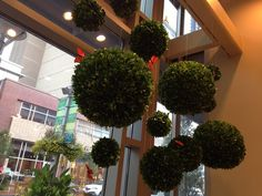 Hanging topiary spheres add an bit of whimsy in any space