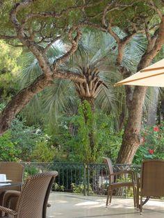 outdoor dining at du Cap restaurant at Grand Hotel du Cap Ferrat - amazing food