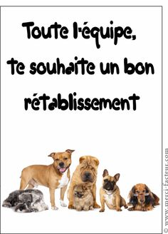 Carte L'équipe bon rétablissement pour envoyer par La Poste, sur Merci-Facteur ! Messages, Dogs, Scrapbooking, Animals, Photos, Get Well Cards, Merry Christmas Images, The Letterman, Proverbs Quotes