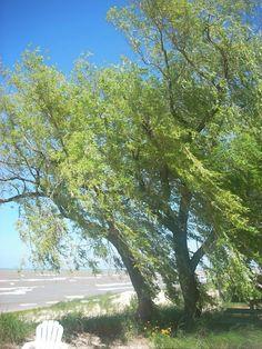 Summer Willow 10