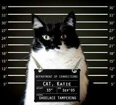 Suspect Cat ^^