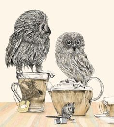 owls drinking tea, a book of nonsense by gabriella barouch