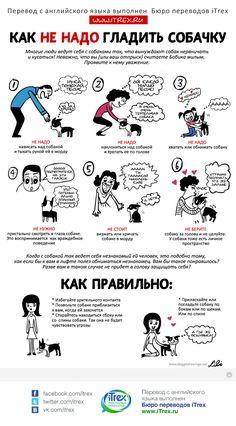 Как не быть укушенным собакой? А особенно,если вы любите их потискать. Читайте правила поведения с этими животными в новой переведенной инфографике.