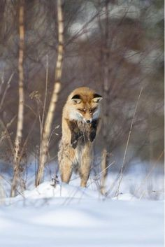 Take your camera with you and get a glimpse of Estonia's rich animal kingdom, with moose, deer, boar, lynx, foxes, wolves, hares, squirrels and countless birds.