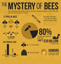 a bee-autiful infographic! Via: World Beekeeping Awards ‪ ‪ ‪ Honey Bee Facts, Types Of Bees, Bee Supplies, Raising Bees, I Love Bees, Bee Farm, Bees And Wasps, Bee Friendly, Save The Bees