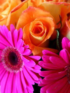 orange + bright pink