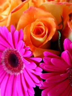 Orange Bright Pink Pretty Flowers Colors Hy