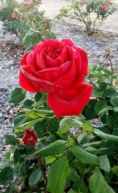 authorbryanblake.blogspot.com