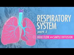 Respiratory System, part 1 - Watch and Study