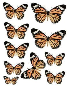Swirlydoos Monthly Scrapbook Kit Club: Forums / Images & Graphics / Butterflies