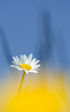 "/ Photo ""Primavera"" by Vito Miribung Flower Backgrounds, Flower Wallpaper, Cool Wallpaper, All Nature, Amazing Nature, Yellow Flowers, Beautiful Flowers, Mandala, Floral Border"