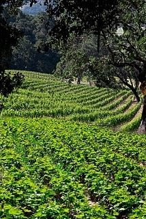 The Hot New Wine Country of Paso Robles California