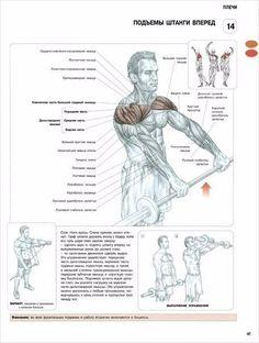 2) Подъем штанги вперед задействует переднюю часть дельтовидных мышц, верхнюю часть грудных мышц, подостную мышцы, а также в меньшей степени трапециевидные мышцы, передние зубчатые мышцы и короткую головку бицепса