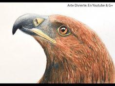Cómo dibujar una cabeza de águila con lápices de colores acuareleables - Arte Divierte - YouTube