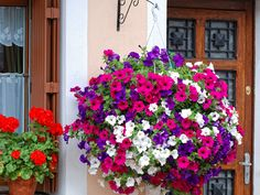 hanging flower basket ideas - A Ball of Petunias Hanging Basket Garden, Hanging Flower Baskets, Hanging Planters, Pot Jardin, Pink And Blue Flowers, Patio Plants, Plantar, Summer Garden, Spring Summer