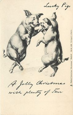 A JOLLY CHRISTMAS WITH PLENTY OF FUN  two pigs dance on hind legs facing each other