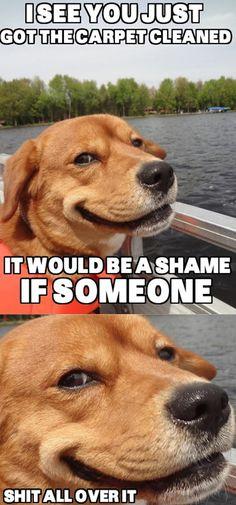Devious Dog...