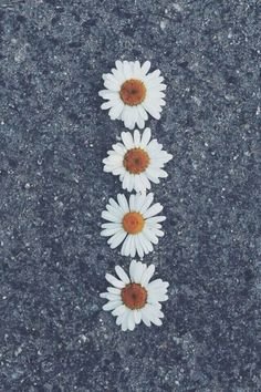 Flowers, wallpaper, and daisy image. Tumblr Wallpaper, Sf Wallpaper, Wallpapers Tumblr, Daisy Wallpaper, Hipster Wallpaper, Tumblr Backgrounds, Cute Wallpapers, Wallpaper Backgrounds, Iphone Wallpapers