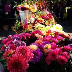 Beautiful Dahlias at Holland MI farmers market