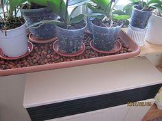 hu - My site Orchids, Planter Pots, Flowers, Home Decor, Amigurumi, Decoration Home, Room Decor, Florals, Lily