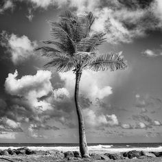 Items similar to Palm, Puerto Rico - Extra Large Framed Canvas Black and White Beach Print up to x of San Juan, Puerto Rico for Home and Office Decor on Etsy My Canvas, Canvas Prints, Black And White Beach, San Juan Puerto Rico, More Pictures, Places To See, Fine Art Prints, Travel Photography, Palm