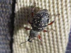 Bugs in Norway