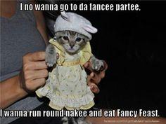 I no wanna go to da fancee partee I wanna run round nakee and eat Fancy Feast.