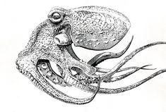Resultado de imagen para octopus drawing