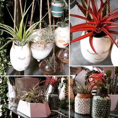 Air Plants (Tillandsias) have just arrived at Poppy& Home and Garden! Air Plants, Garden Plants, Poppy, Home And Garden, Table Decorations, Home Decor, Decoration Home, Room Decor, Home Interior Design