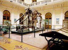 museo storia naturale genova - Cerca con Google