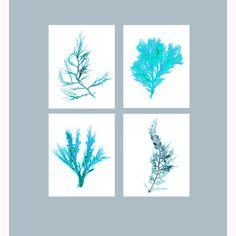 Beach Cottage Decor Set of Four Seaweed Print by TheStrangeBird
