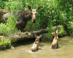 Cute family, just near Anchorage