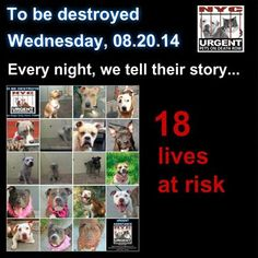 TO BE DESTROYED - 08/20/14 PITTIES ARE IN DANGER AGAIN. THERE ARE FAR TOO MANY TODAY!!! ALL THESE DOGS COUNT ON US!!! LET'S NOT LET THEM DOWN!!! PLEASE OPEN YOUR HEARTS AND PLEDGE, TAKE THEM HOME, BUT BE QUICK AS TIME IS TICKING AWAY. PLEASE BE QUICK WHEN MAKING UP YOUR MIND!!   https://www.facebook.com/Urgentdeathrowdogs/photos/a.611290788883804.1073741851.152876678058553/857470304265850/?type=3&theater