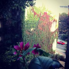 Colors, Berlin  © Wesna Wilson #WesnaWilson
