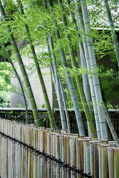 Japanese bamboo fence,  Go To www.likegossip.com to get more Gossip News!