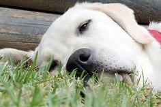 Bello, enjoy his napping time